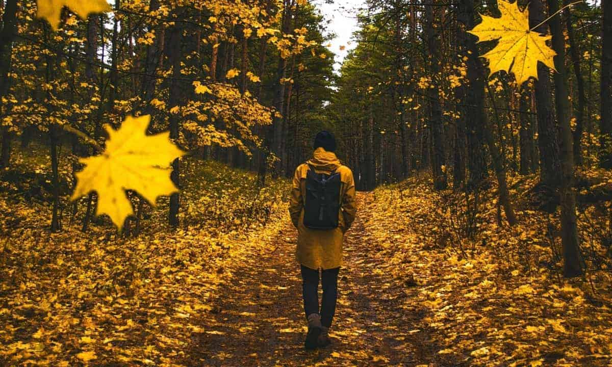 Man walking in autumn falling leaves